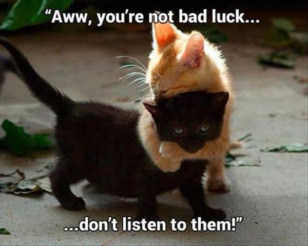 aww youre not bad luck dont listen to them cute cat memes 20 cute cat memes that will put you in a good mood sayingimages com