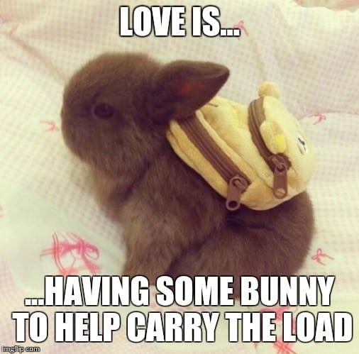 20 Cute Love Memes That'll Melt Your Heart   SayingImages.com