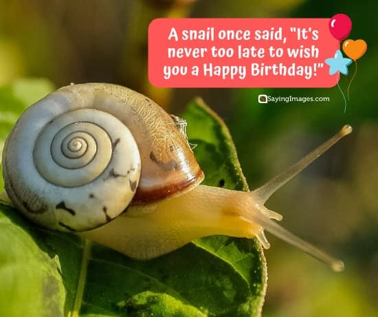 birthday wishes snail sister