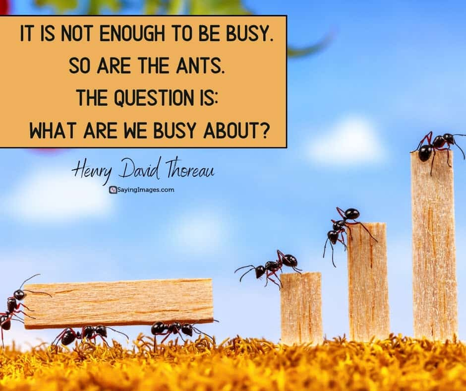 busy question quotes
