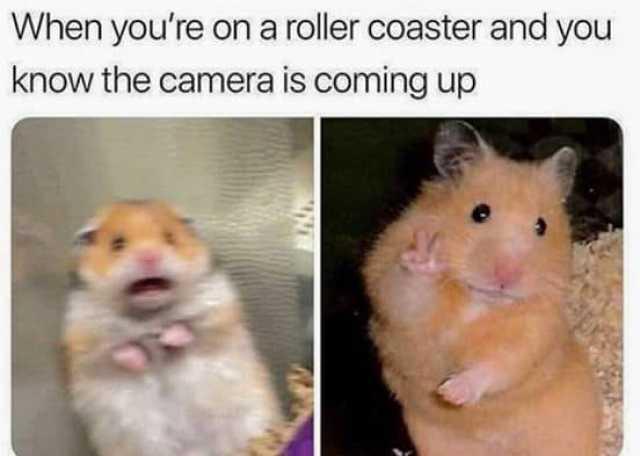 camera rollercoaster meme
