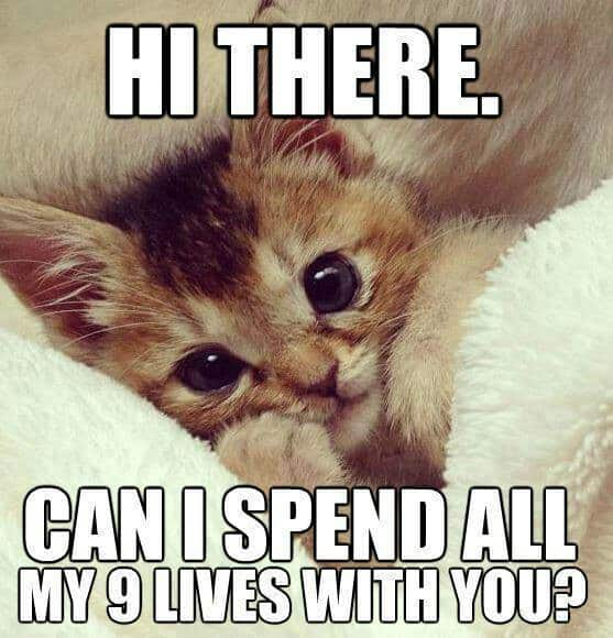 20 cute love memes that ll melt your heart sayingimages com