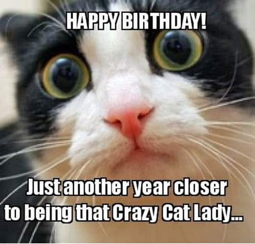 cat birthday another year meme