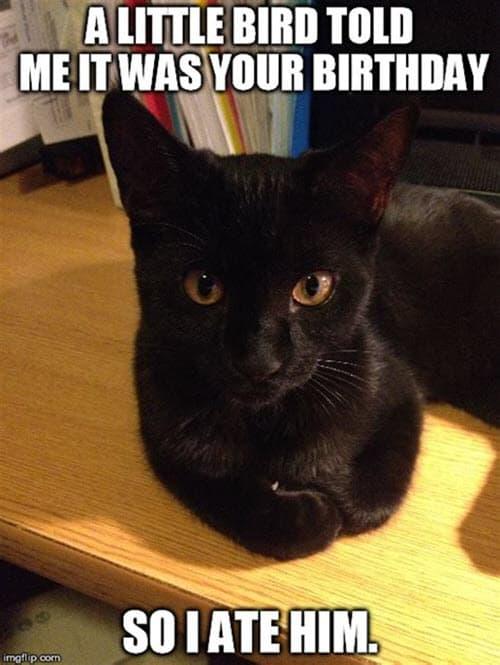 cat birthday bird meme
