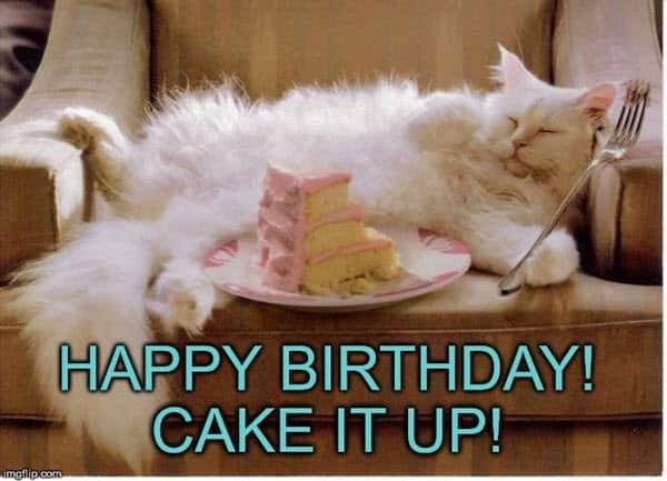 cat birthday cake it meme