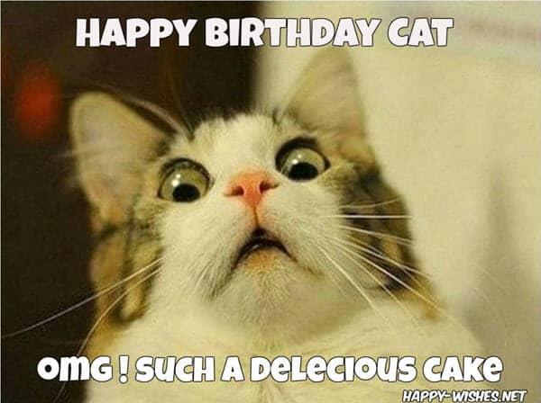 cat birthday cake meme