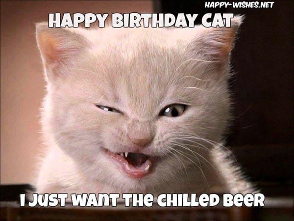cat birthday chilled beer meme
