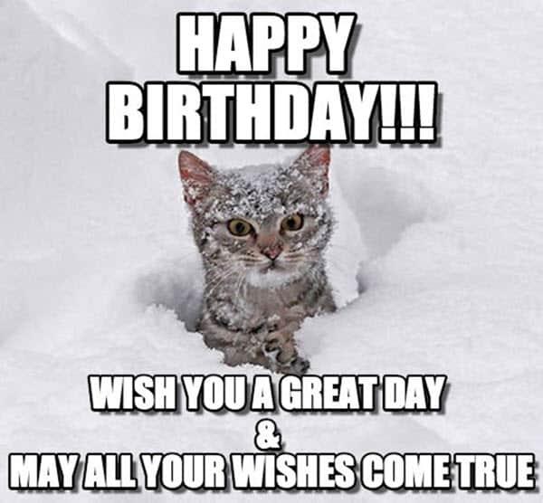cat birthday great day meme