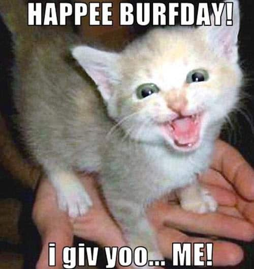cat birthday happee burfday meme