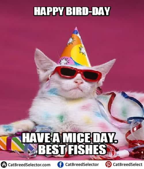 cat birthday happy bird day meme