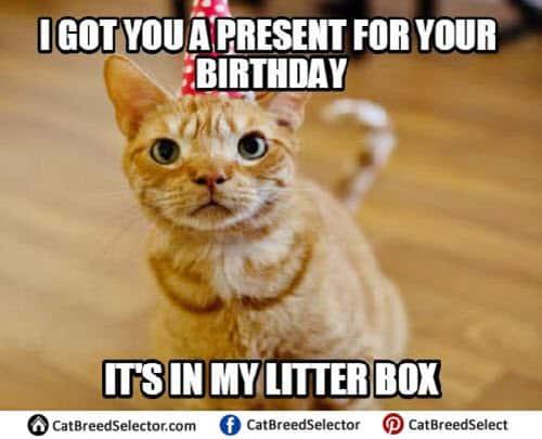 cat birthday litterbox meme