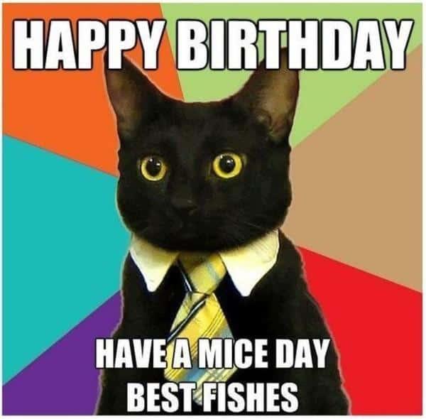 cat birthday mice day meme