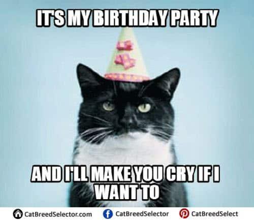 cat birthday party meme
