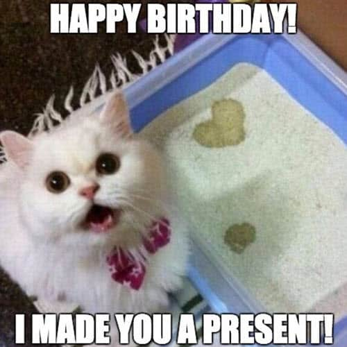 cat birthday present meme
