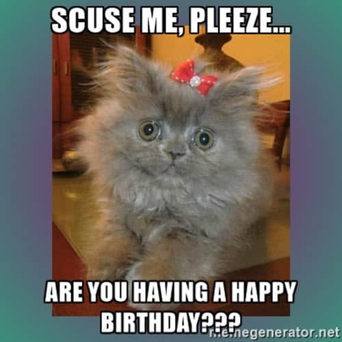 cat birthday scuse me meme