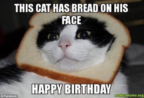 cat has bread on his face birthday meme