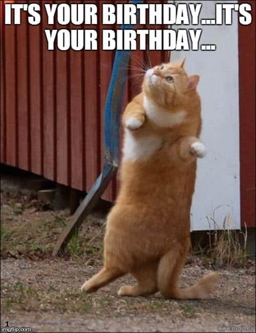 cat its your birthday meme