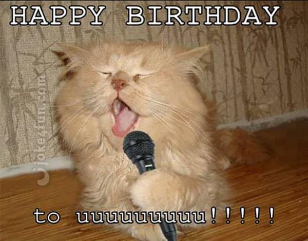 cat singing birthday meme