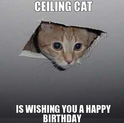 Funny Birthday Memes For Yourself : Cat birthday memes that are way too adorable