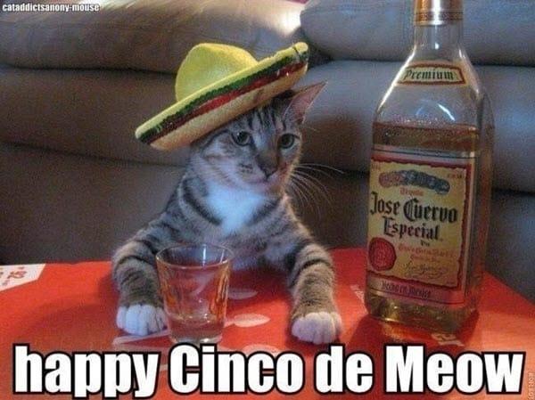 cinco de mayo meow meme
