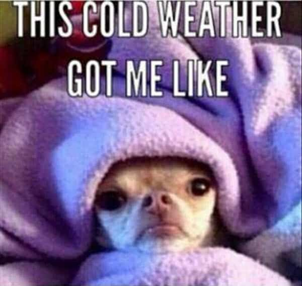 cold weather got me like meme