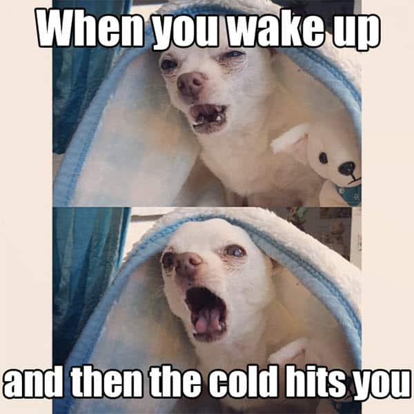 cold weather wake up meme