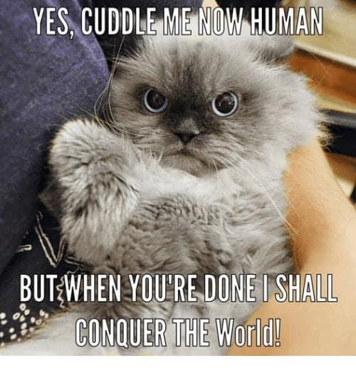conquer the world cuddle meme