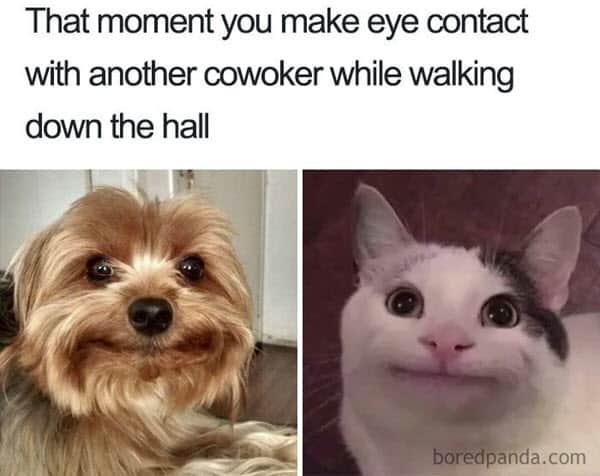 coworker eye contact meme