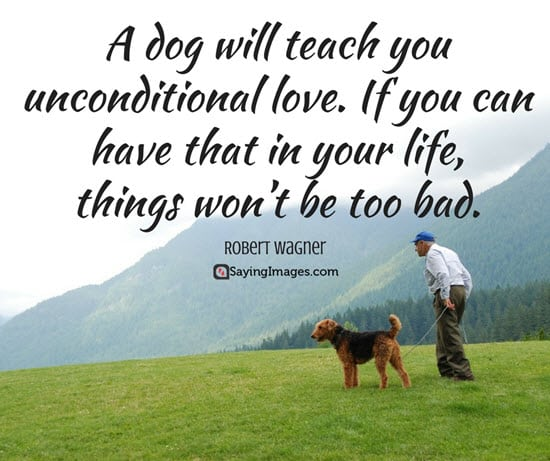 cute dog sayings