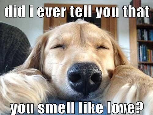 20 Cute And Funny Valentine S Day Memes Sayingimages Com