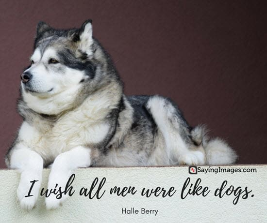 dog and man quotes