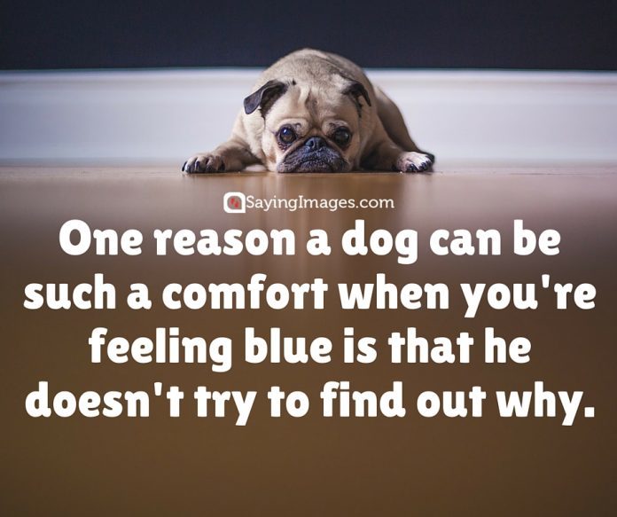 dog best friend quotes 1 696x583 - Please Share Pictures