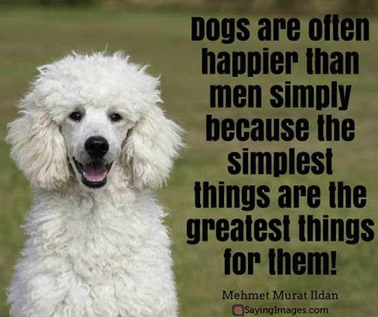 50 Dog Quotes For People Who Love Dogs | SayingImages.com