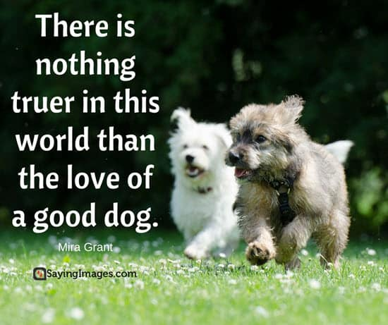 Quotes About Love Dogs : 50 Dog Quotes For People Who Love Dogs SayingImages.com