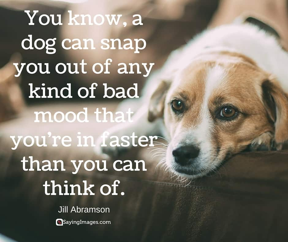 20 Cute  Famous Dog Quotes  SayingImages.com