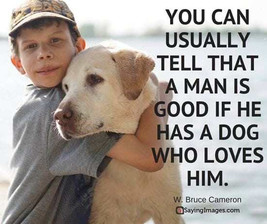 Dog Quotes Stunning 48 Dog Quotes For People Who Love Dogs SayingImages