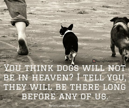 dog sayings