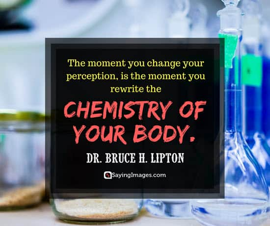 dr bruce lipton perspective quotes