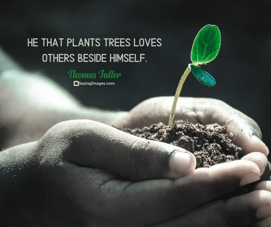 earth day trees quotes