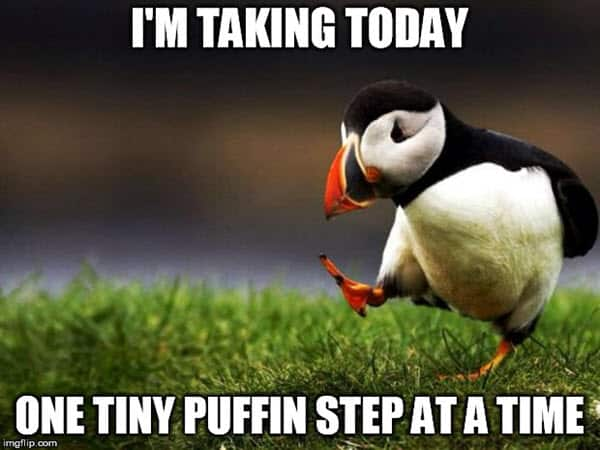 encouragement tiny puffin meme
