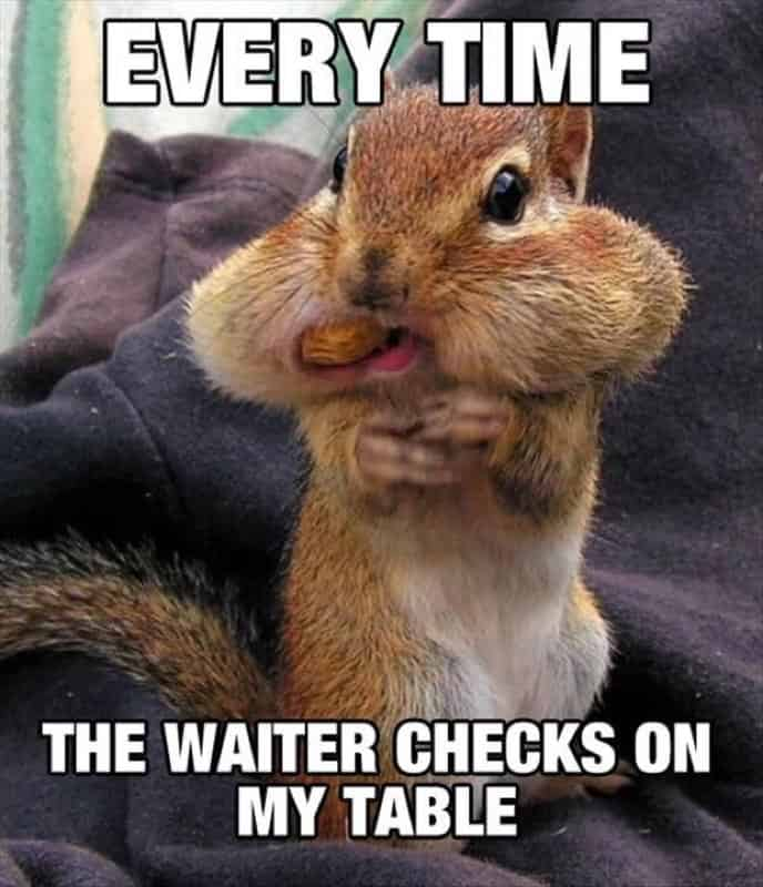 every time the waiter checks on my table squirrel meme 20 squirrel memes that will melt your heart sayingimages com