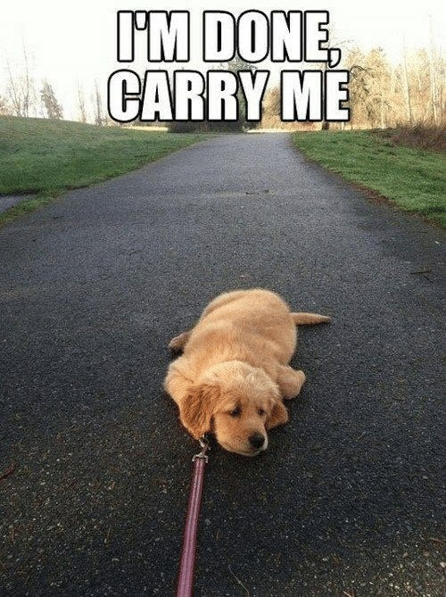 exhausted carry me meme