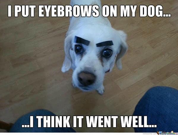 eyebrow on my dog meme