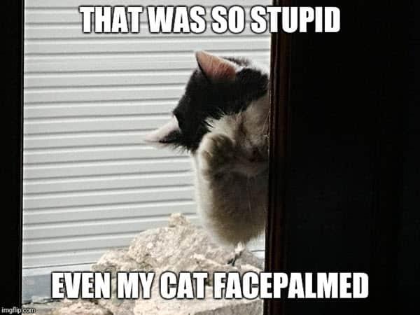 facepalm cat memes