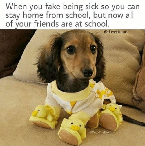 fake being sick meme