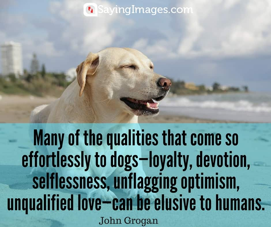23 Brave And Inspirational Dog Quotes Sayingimages Com