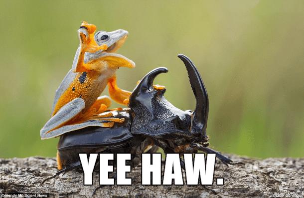 frog yeehaw meme