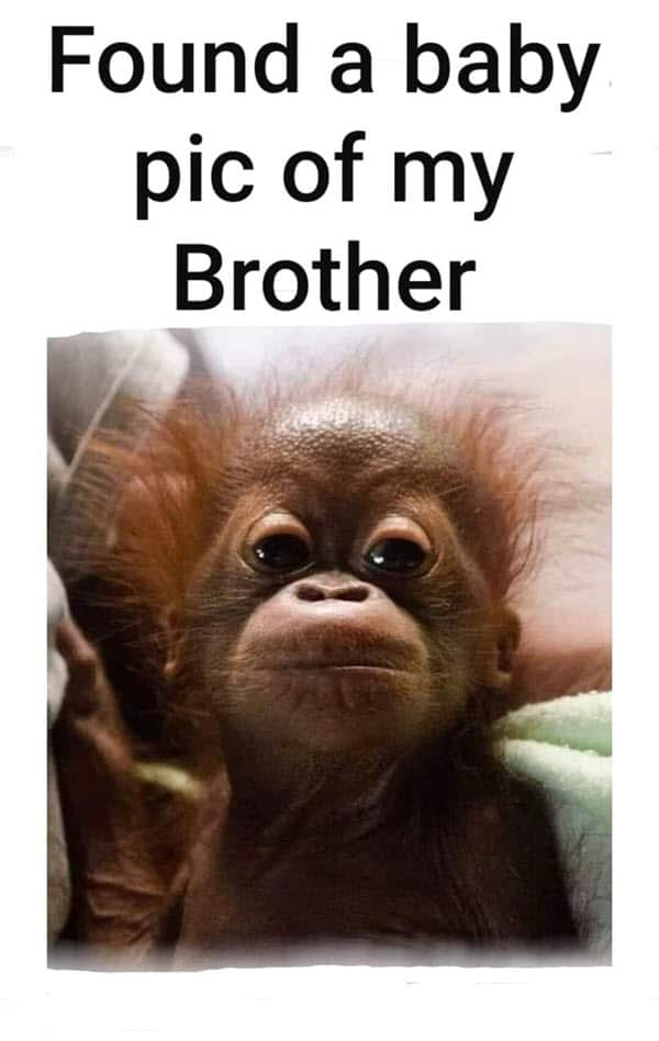 funny brother picture memes