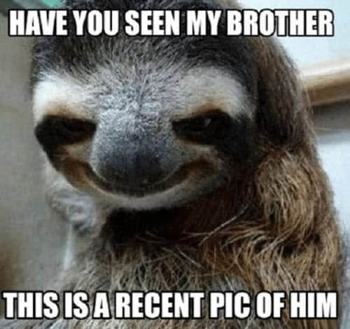 funny brother recent pic memes