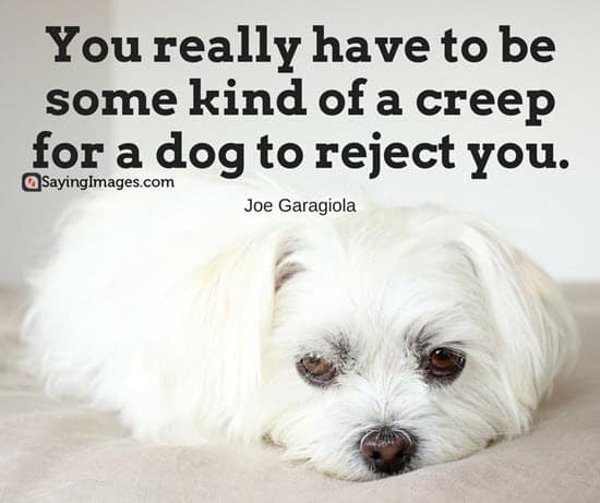 60 Dog Quotes For People Who Love Dogs SayingImages Extraordinary Quotes About Dogs Love